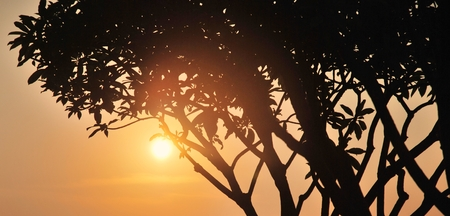Shadow of tree on sunset background