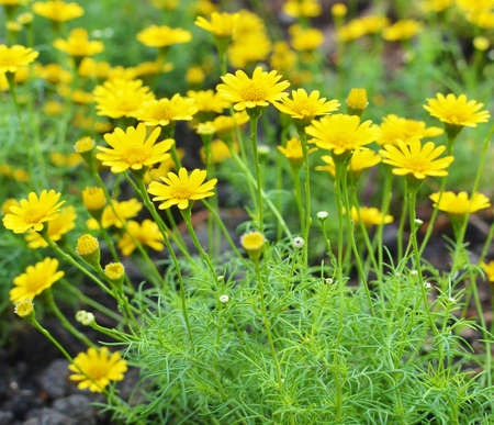Yellow flower background photo
