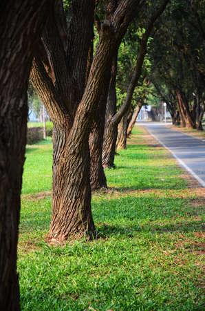 Trees on green grass in Garden public park,  Thailand photo