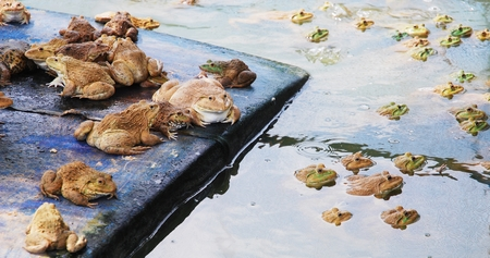 negocios comida: granja de ranas de empresa alimentaria