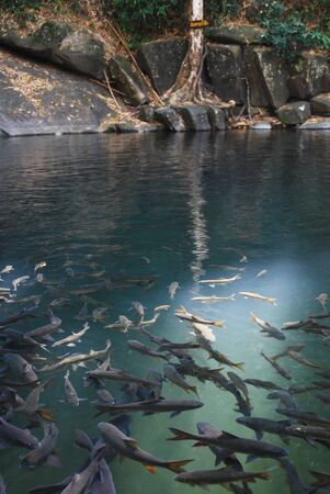 nationalpark: Fish at Preelwaterfall nationalpark in Thailand