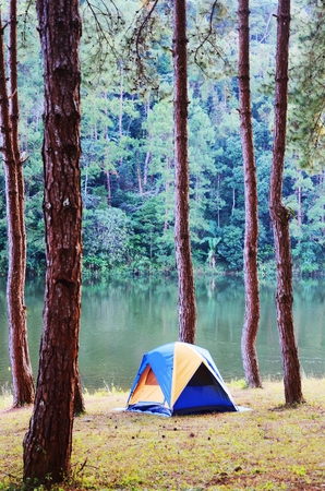 Camping in the forest photo