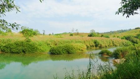 blue mountains tree frog: Landscape of river