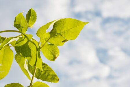 blue green background: Green leaf on blue sky background