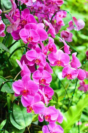 violate: Violate Orchid Stock Photo