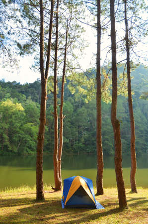 natual: Camping in the forest Stock Photo