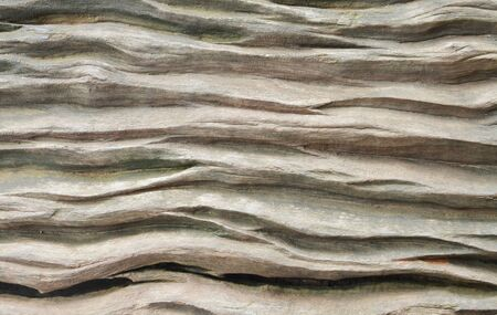 wood texture background: Old wood texture  background Stock Photo