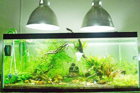 aquarium hobby: Aquarium Stock Photo