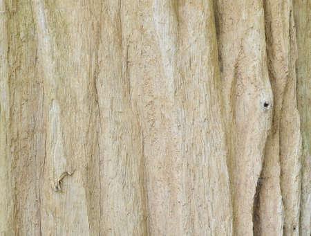 bark texture: Bark texture background
