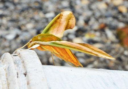 moth: Moth