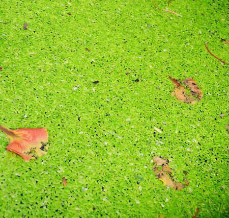 green background: Green Grass Texture Background