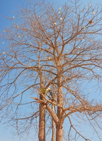decora: tree on blue sky background