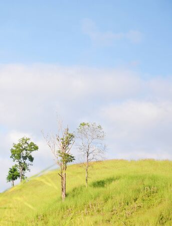 blue green background: Green grass and blue sky background Stock Photo