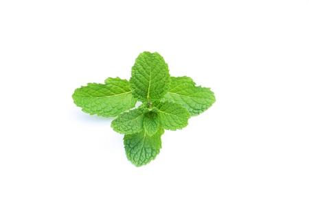 Peppermint Stock fotó