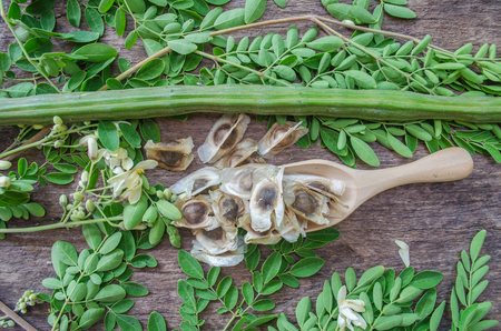 Moringa seeds on a wooden spoon surrounded by plant leaves