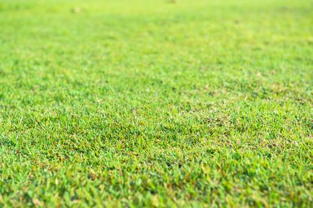 Green grass, fresh and vast.