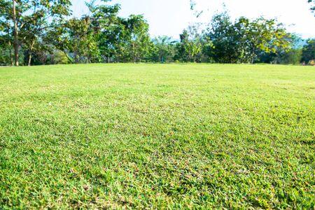 Green grass, white background 스톡 콘텐츠