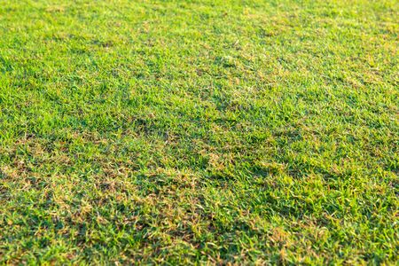 Lawn green, bright morning sun exposure.