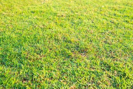 Fresh Green Lawn Name Sunlight