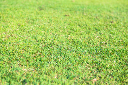 Lawn green and bright light the sun in the morning.
