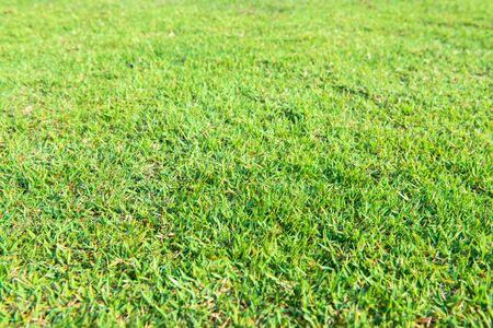 Bright green lawn light morning sun.