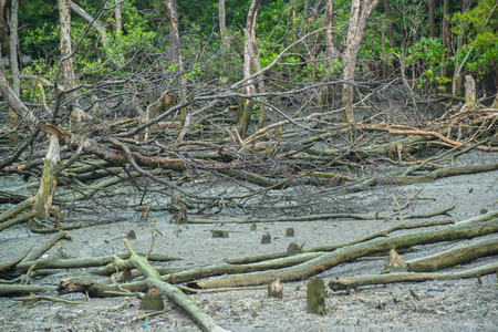 Mangrove forest destroyed in Thailand