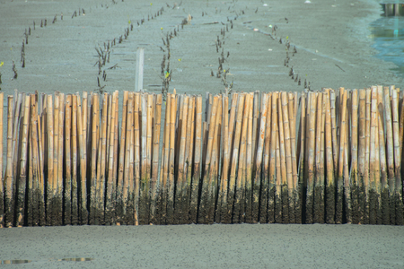 Many bamboo to protect the mangrove. Stock fotó