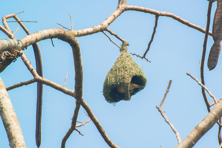 Bird's Nest in Thailand Standard-Bild