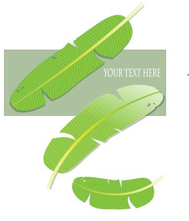 banana leaf business idea