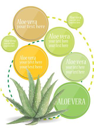 aloe vera: Aloe Vera watercolor with frame