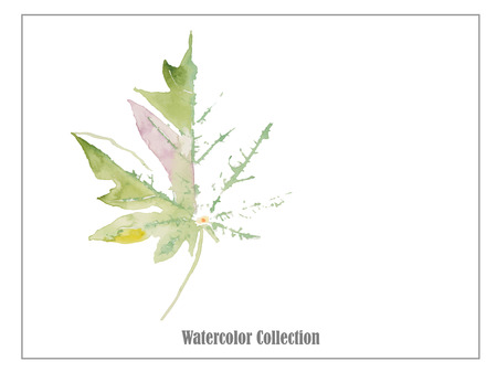 transparently: green leaf watercolor