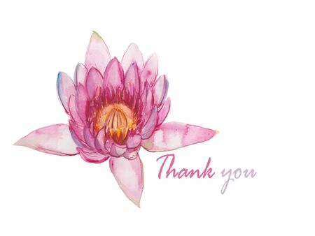 decoraton: pink waterlily watercolor illustration vector Illustration