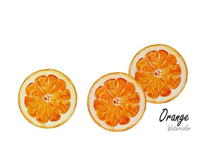 orange cut: Orange cut. hand drawn watercolor painting on white background.Vector illustration