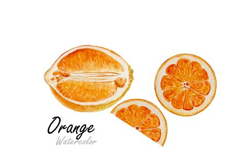 fruit: Orange set.Hand drawn watercolor painting on white background.Vector illustration Illustration
