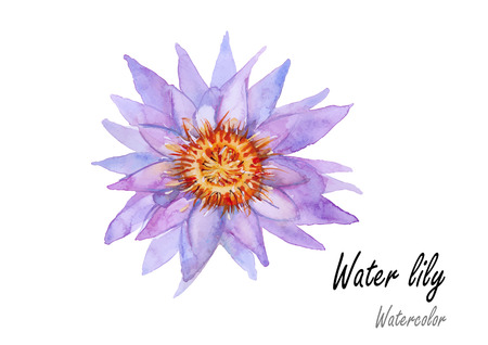 Waterlily. Hand drawn watercolor painting on white background.purple color.Vector illustration