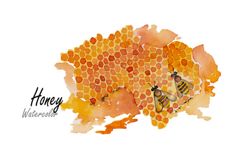 honey bee: Honey.Hand drawn watercolor painting on white background.Vector illustration