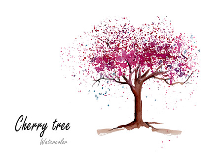 Cherry tree.Hand drawn watercolor painting on white background.Vector illustration Illustration