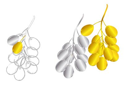 silver jewelry: Grapes fruit Golden and Silver jewelry concept  on white background  ,vector illustration