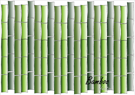 bamboo: bamboo wall,green bamboo wall or background  on white ,vector illustration