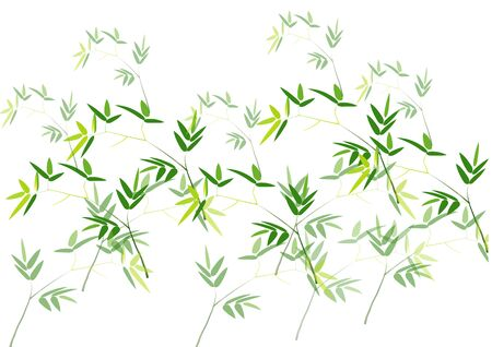 bamboo: Bamboo branch background ,green bamboo branch and leave on white background