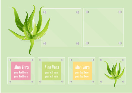 vera: Aloe Vera and glass frame on green background,Vector illustration