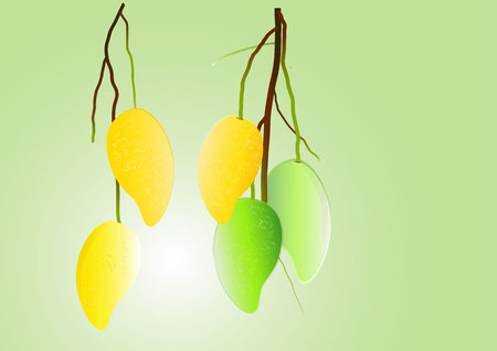 mango: Mango with branch vector illustration