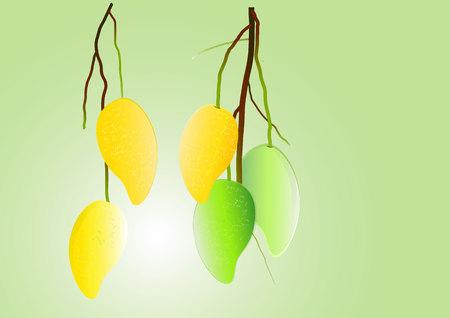 mango: Mango z ilustracji wektorowych oddział