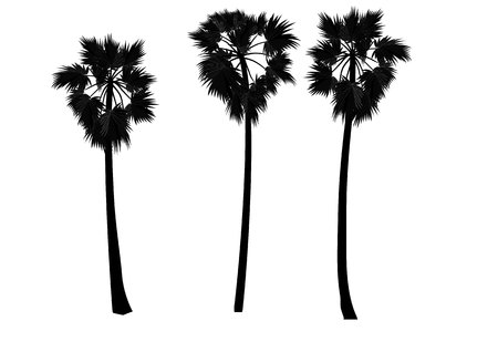 human palm: Palm tree ,sugar palm vector illustration