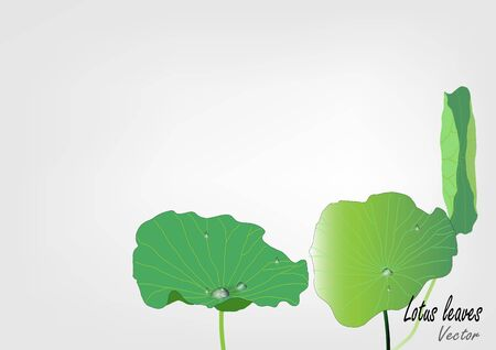 lily pad: lotus leaves with water drop vector illustration