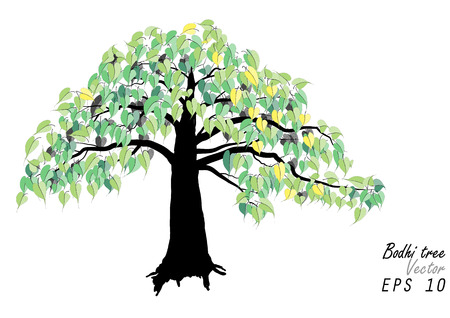 feuille de vigne: Arbre de la Bodhi, arbre de la Bodhi vert illustration vectorielle