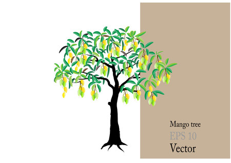 Mango tree with mango fruits ,vector illustration