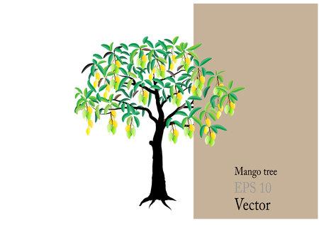feuille arbre: Manguier avec des mangues, illustration vectorielle