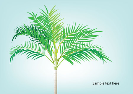 pigmy: Palm tree ,Dwarf Date, Pigmy Date vector illustration