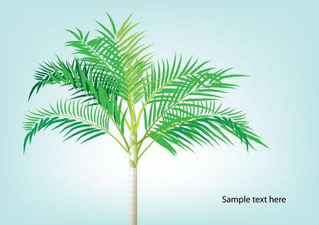 pigmy: Palm tree ,Dwarf Date, Pigmy Date vector illustration